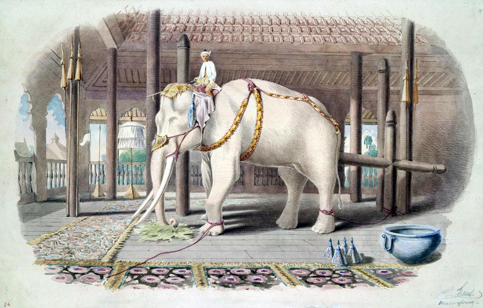 NSDI-India-White-elephant