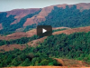 western-ghats-lost-35-forest-cover-last-9-decades-reveals-finding-nrsc