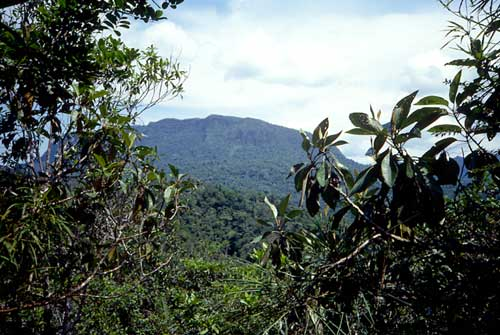 Remapping Initiative Reveals Increase In Forest Cover In
