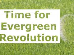 evergreen revolution