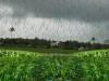 Rainfall Forecasting Data