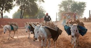 technology to track donkey's life