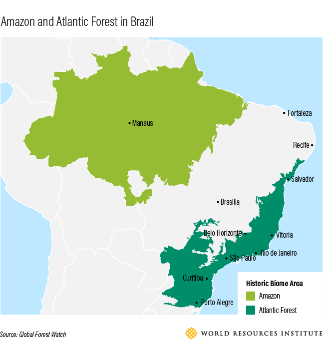 A Tale of Two Cities in Brazil (and the Forest that Connects ...