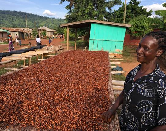 Ghana steps up commitment to end cocoa farming deforestation