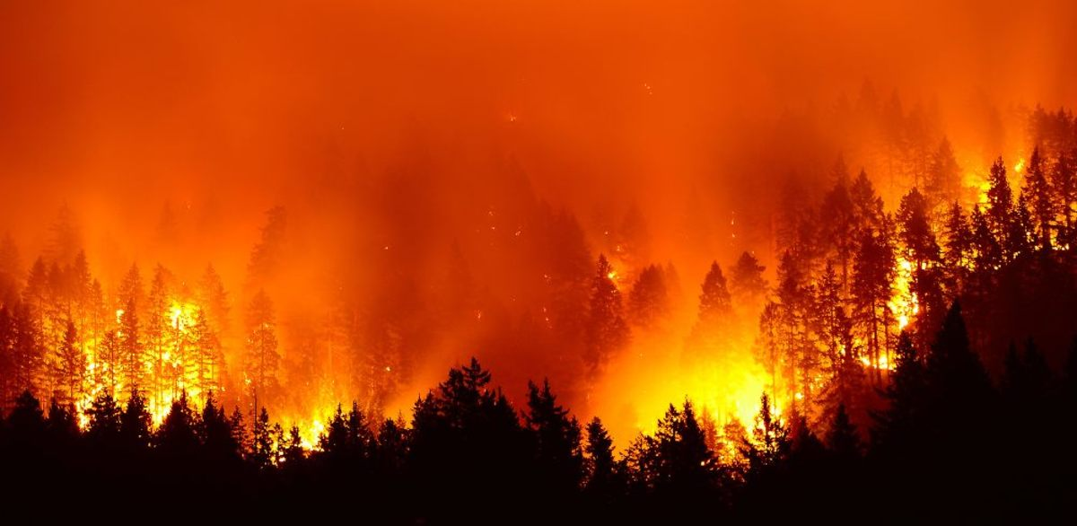 Image result for amazon forest fire